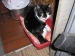 Hier legt sich Elvis gerade in seine Kiste