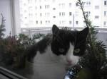 ...er macht den Balkon unsicher...