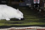 Aua Kieferkrampf - Muss erstmal die Maus loslassen