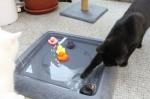 jetzt ist die schwarze Ente dran