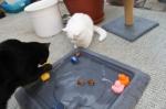 Mümi hat das Ei fast draußen