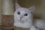 Meine blauen Augen wollt ihr?