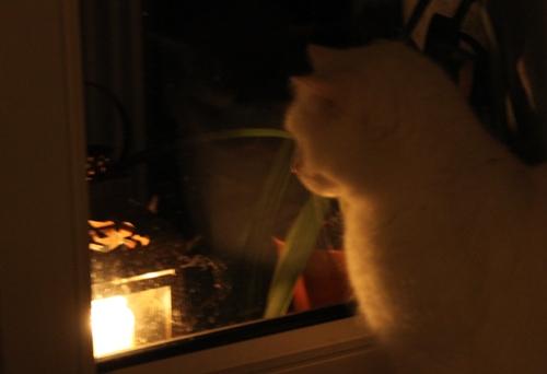 Eh Kerzenengel, maunz was!