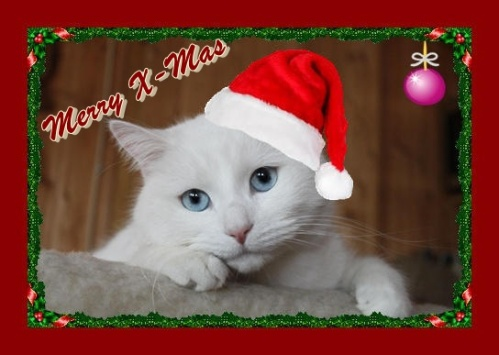 Weihnachtsgruß 2 Merry X-Mas