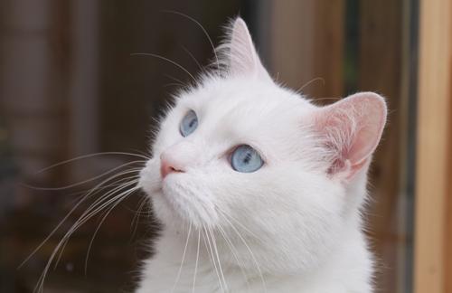 Blau-Auge