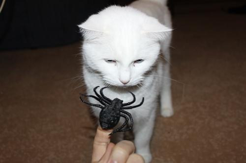 Spinnenalarm!
