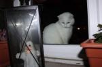 unser kleines Gespenst saß draußen