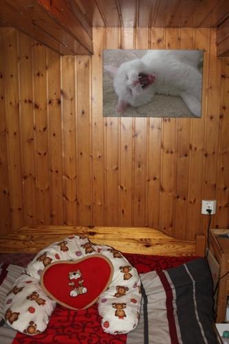 ...über dem Bett der Dosies