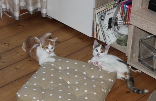 Lilli und Robin