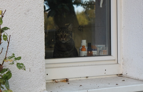 Franzi schaut aus dem Badfenster