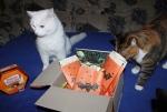 Och Katzo - nun muss ich teilen