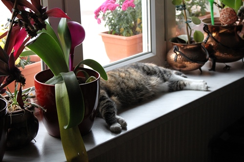 Fine liegt auf dem Fensterbrett