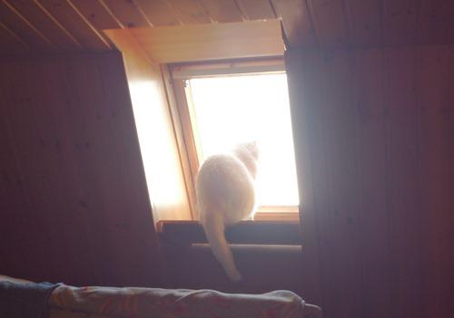 ich am Fenster unterm Dach