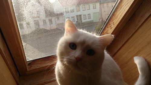 ...wann putzt du mal das Fenster?