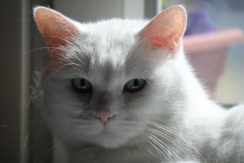 Ich liebe Katzenwellness