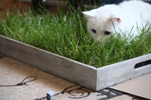 vorne die Fliege, ich im Gras
