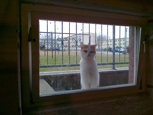 Benny guckt durchs Fenster