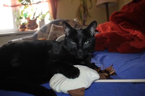 War hat Katz nicht öfter Burzeltag?