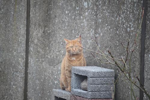 Nachbarskater Whisky