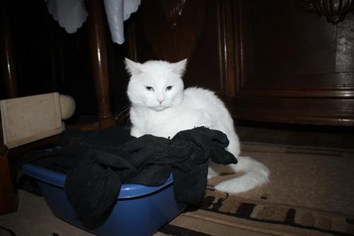Wer macht hier die Socken?