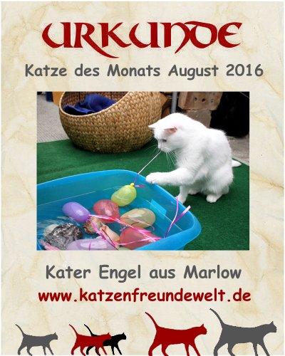 Katze des Monats August 2016