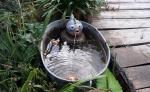 Spuckfischi in Zinkwanne
