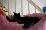 Ach ich liebe das Kitty-Betti
