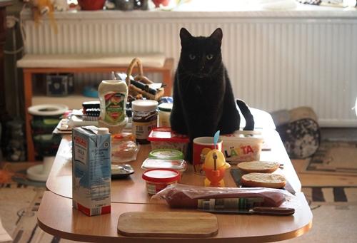 Mümi auf dem Frühstückstisch