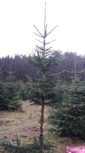 Der Katzen-Weihnachtsbaum