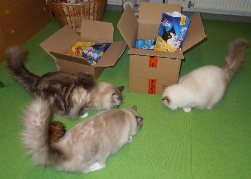 Tobias, Amira und Luna mampfen