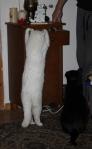 alles muss Katz selber machen