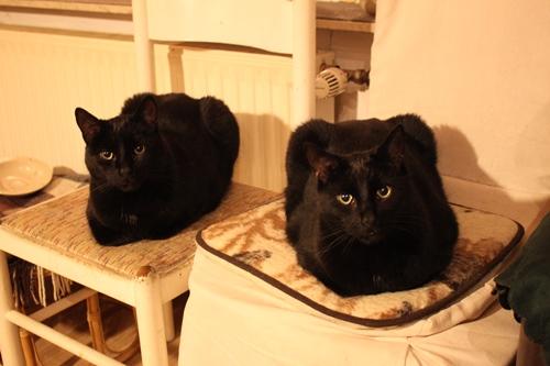 links sitzt Mümi, rechts der Teufel