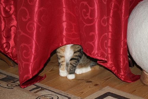 Na wer versteckt sich da?