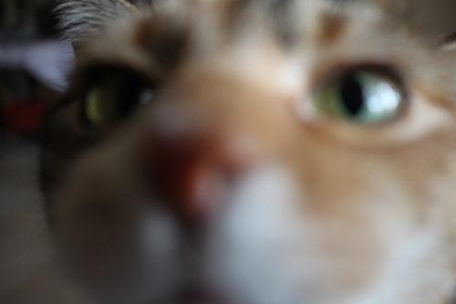 Ich seh euch!
